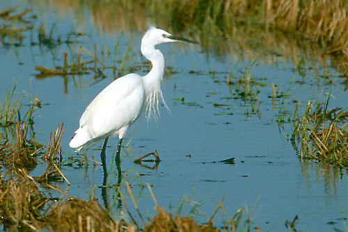 different types of birds little egret youtube